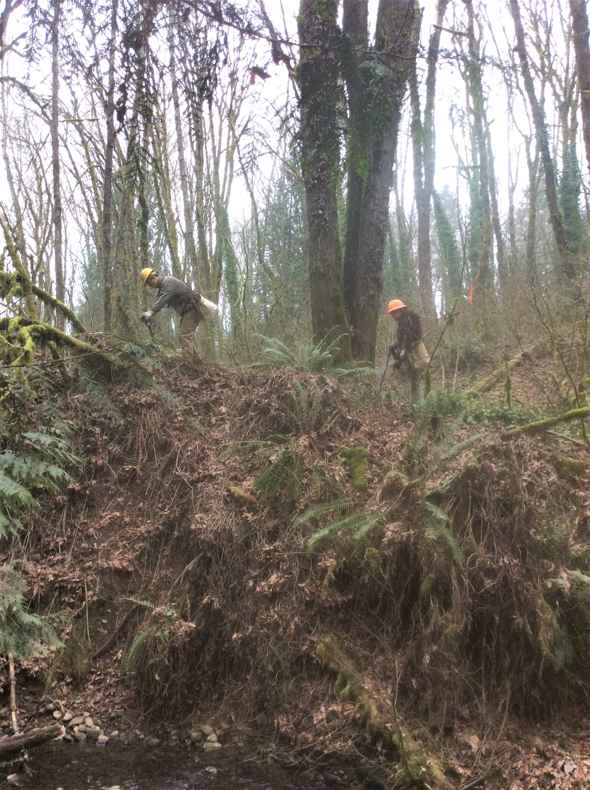 Two environmental restoration contract crew members planting native plants on a steep slope near the creek