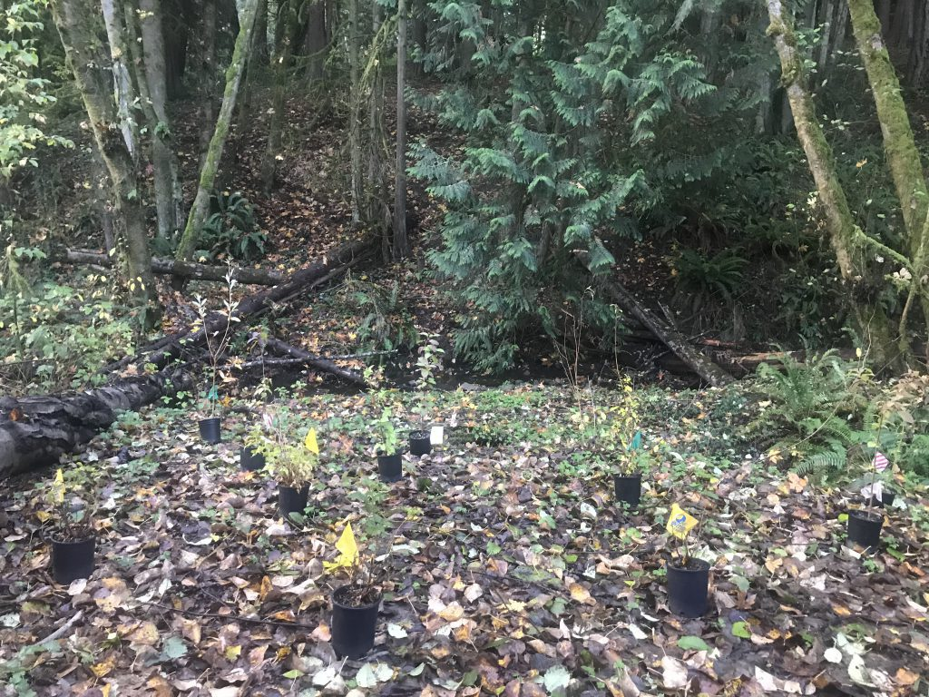 Ten potted plants spaced on the forest ground for planting